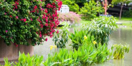 waterlogged-flowers