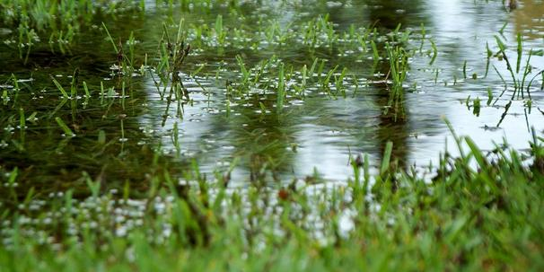 waterlogged-lawn